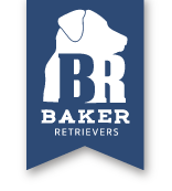 Baker Retrievers